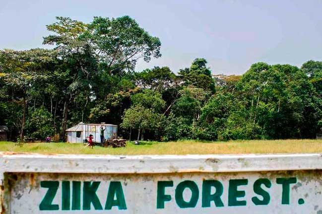 bosque-zika